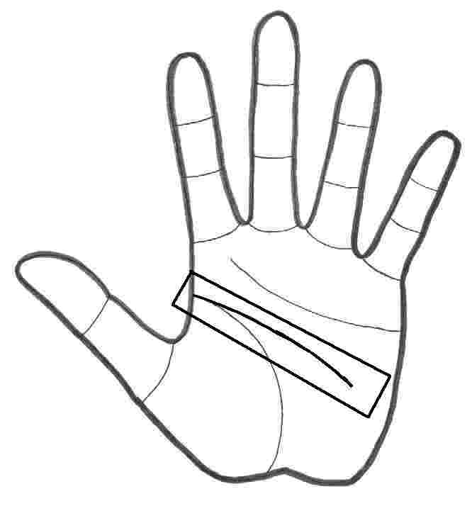 The Three Major Hand Lines
